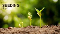 Seeding là gì? Có những hình thức seeding nào?